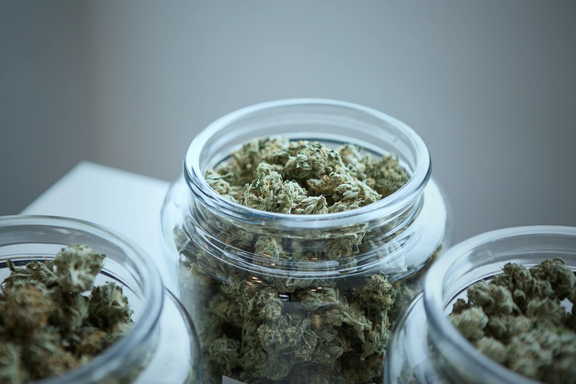 Conoce el panorama sobre la legalización de la marihuana en México